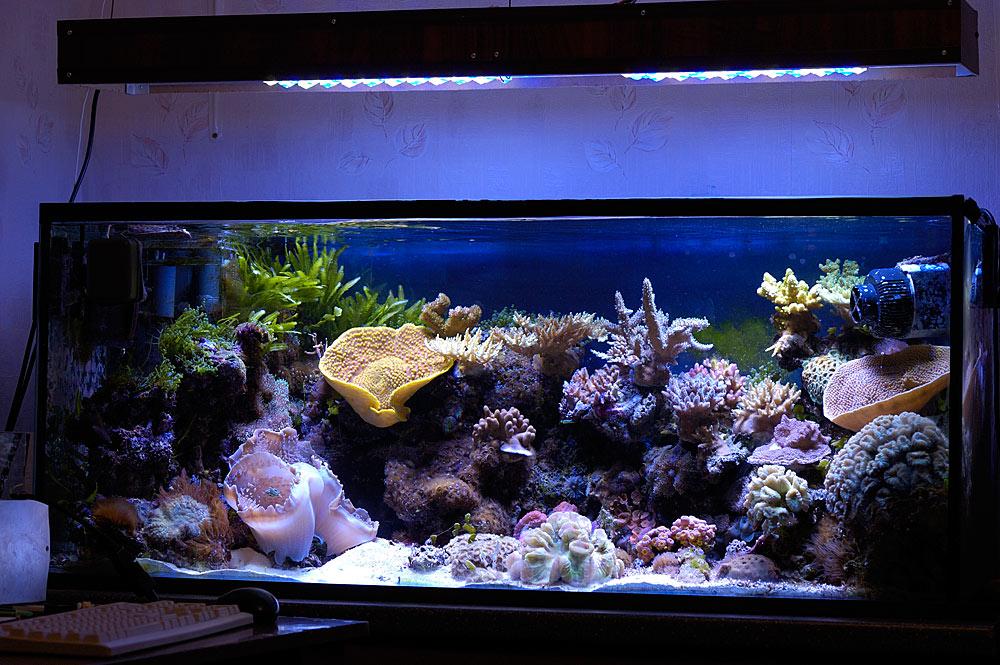DIY LED lighting + DIY LED driver + DIY LED Controller - Reef